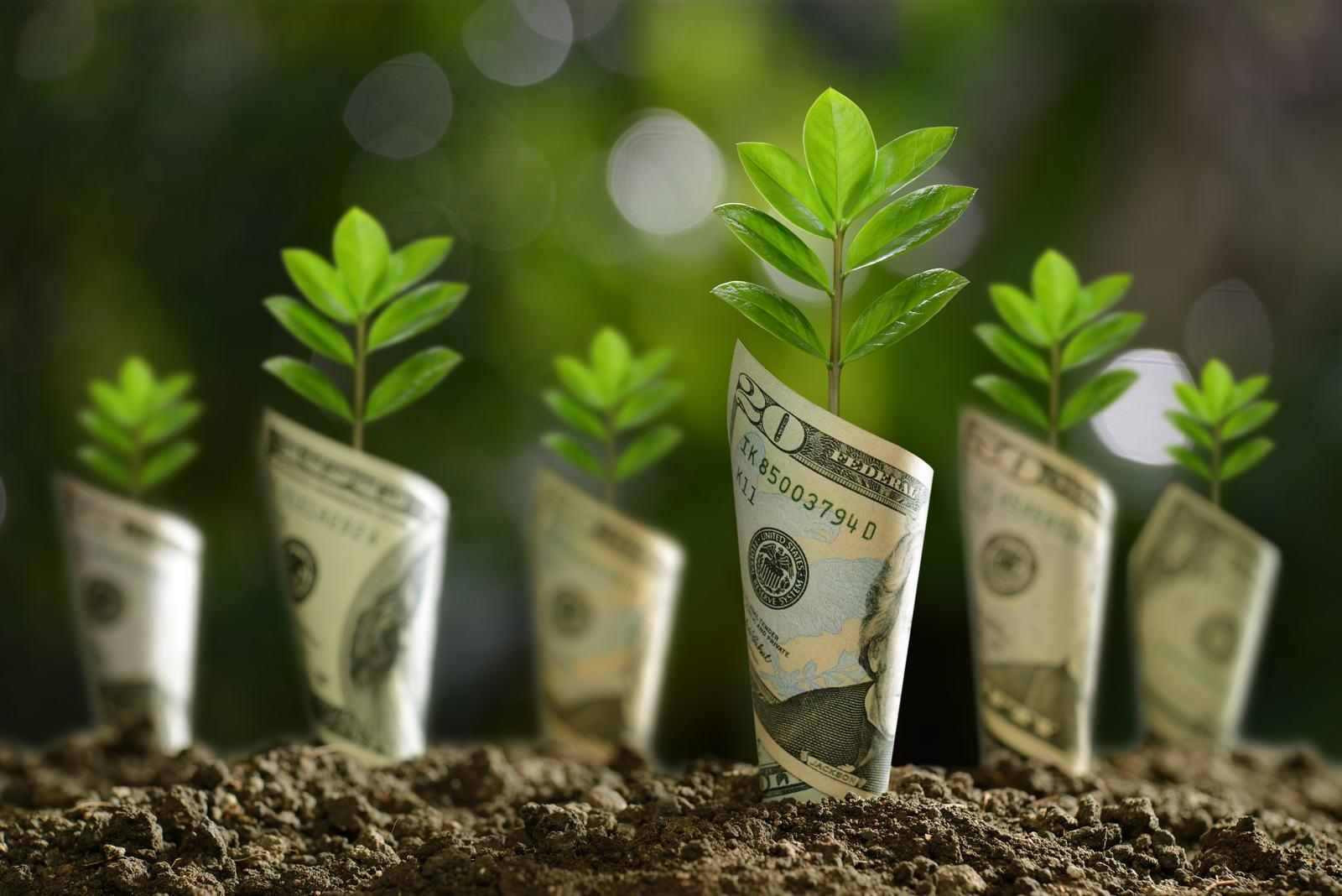 dolar analizi